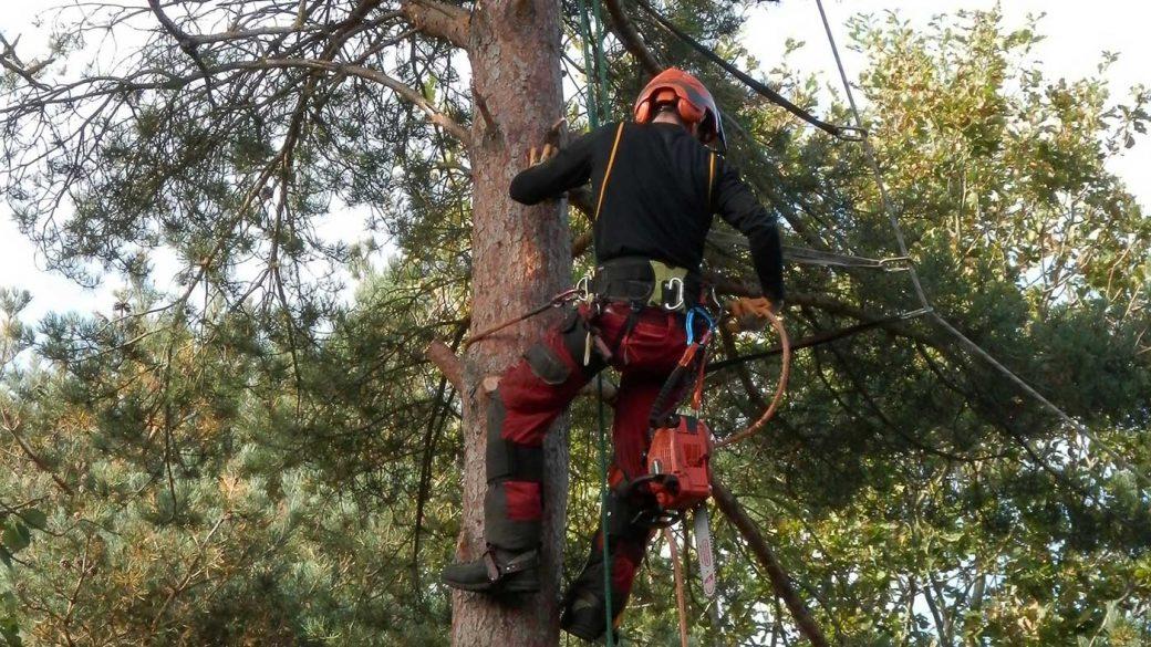 A tree surgeon