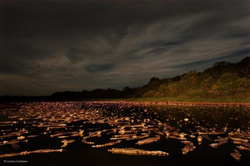 """Caiman Night,"" by Luciano Candisani, Brazil"