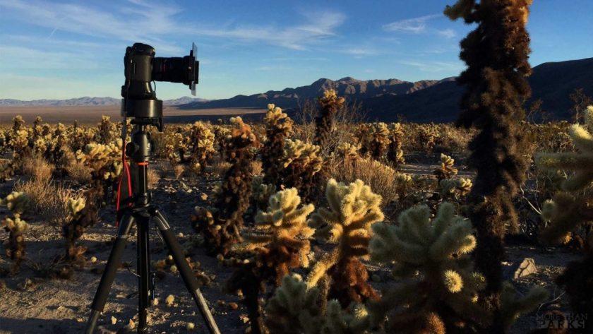 Capturing cacti in Joshua Tree. Photo from MTJP.