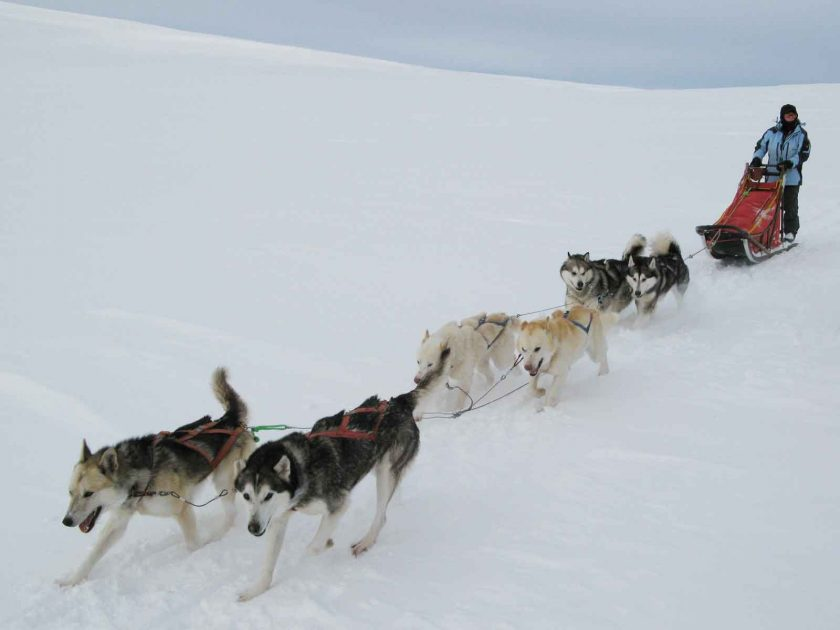 Dog sledding is a unique snowy adventure. Photo: m.prinke (Flickr)