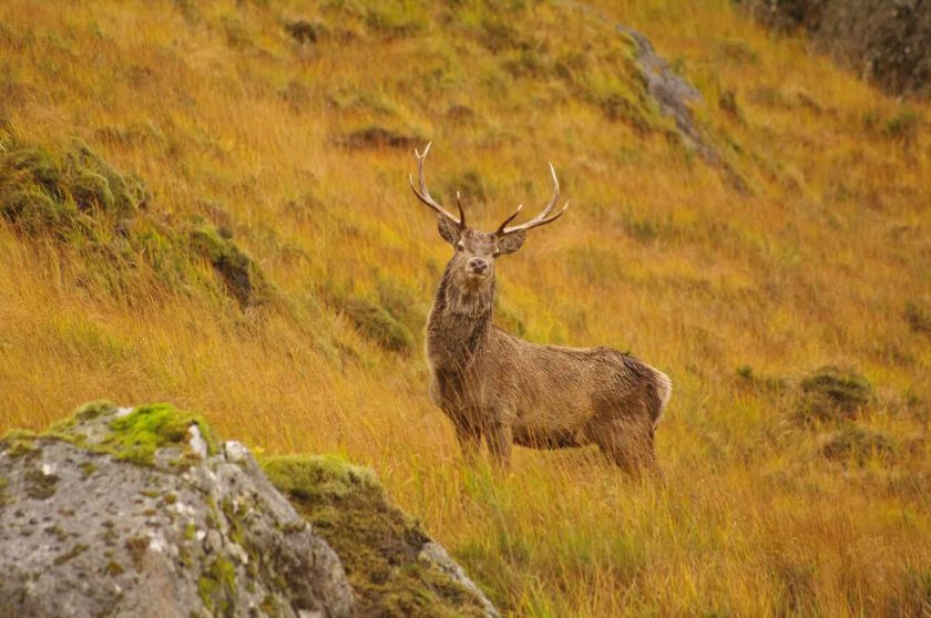 Watching red deer in the rutting season is awesome. Photo: ddh Photos/Flickr