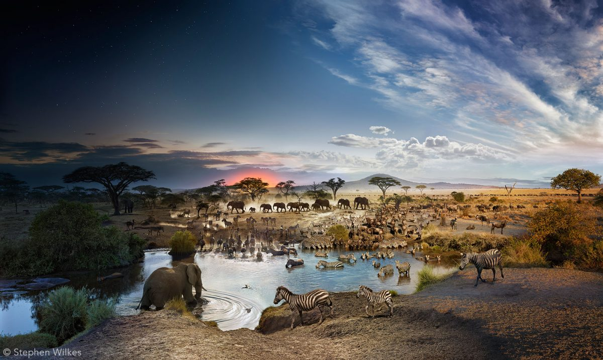 day-to-night-serengeti