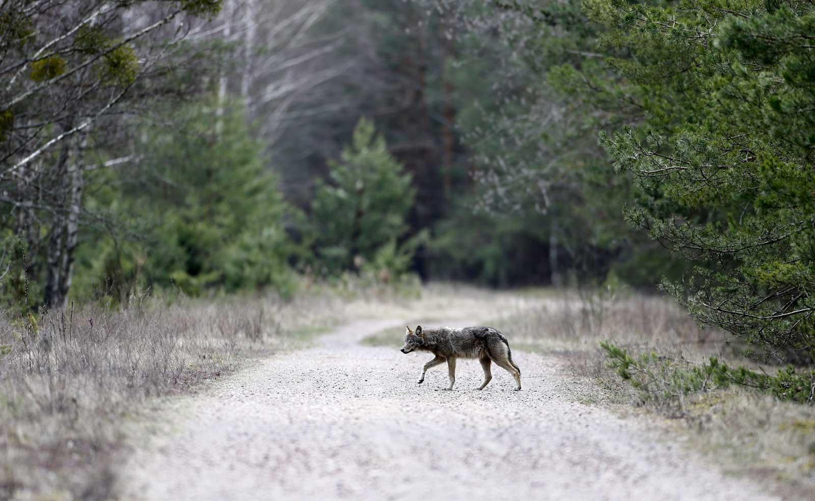 Nature has taken over Chernobyl