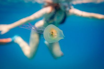 Photo: 'Let me outta here!' – amazing picture of a fish trapped inside a jellyfish