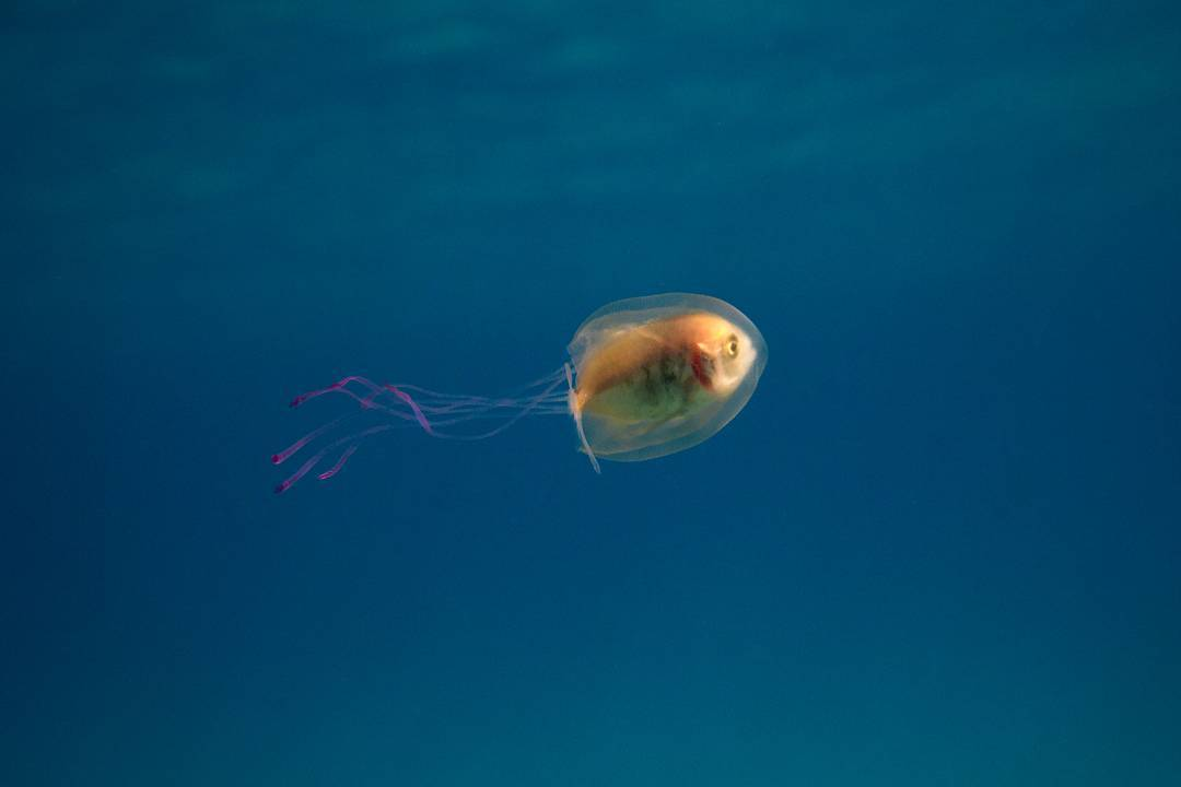 Photo 39 let me outta here 39 amazing picture of a fish for Fish in jellyfish