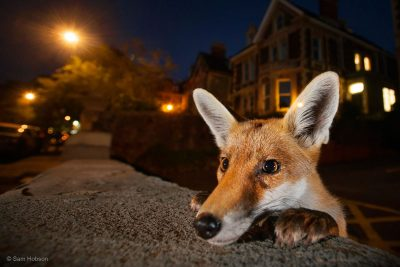 Gallery: Wildlife Photographer of the Year Exhibition highlights Nature at its Best