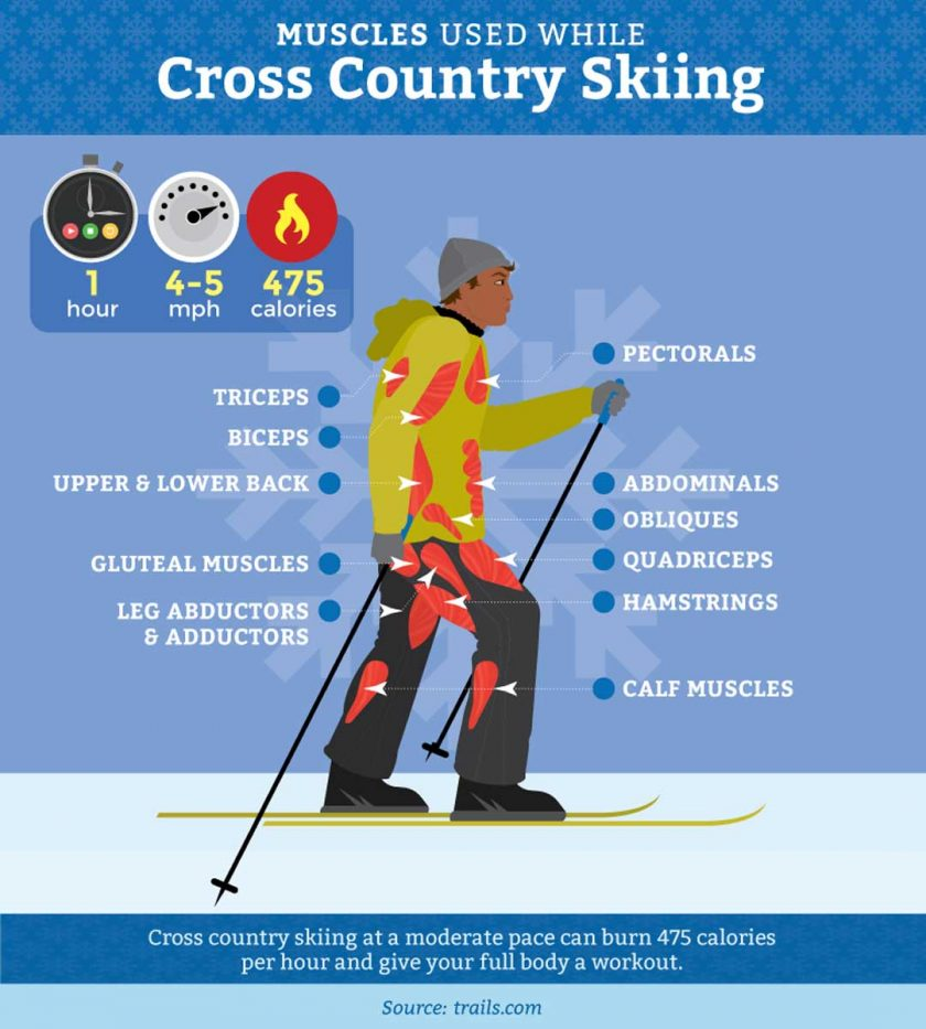 muscles-cross-country-skiing