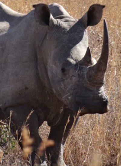 African Rhino. Photo: Nicholas Harvey