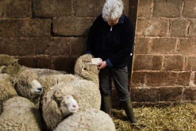 Lesley Prior with some of the Bowmont flock.