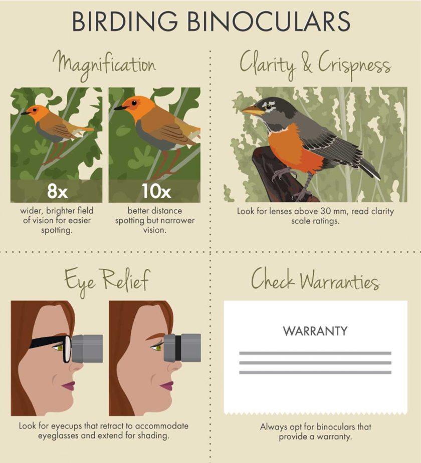 birding-binoculars