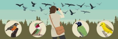 Guide: The best places for Winter Bird Watching in the US