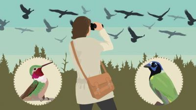 The best places for Winter Bird Watching in the US