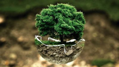 Top 3 steps which could improve environment conservation in 2017