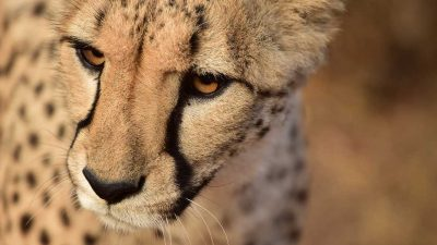 The secrets behind South Africa's safaris. One that values animals for their profit