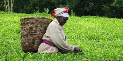 Fairtrade fortnight – How fair is your tea and coffee?