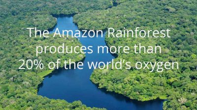 How can we help save the Amazon Rainforest?