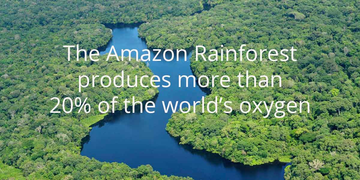 save amazon rainforest essay An overview of the amazon rainforest, including its natural features, its ecology, the human threats it faces, and how people can work to save it.