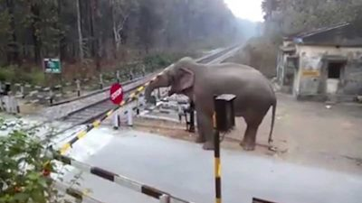 Elephant carefully lifts barrier to cross train tracks and then crushes the next one