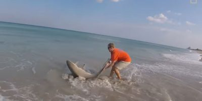 Man pulls shark from ocean to remove hook from its jaw