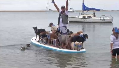 Champion tandem surfer 'unofficially' breaks the record for most dogs on a surfboard