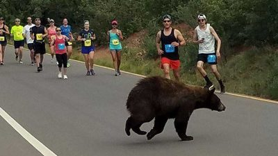 Black Bear interrupts 10 mile race in Colorado