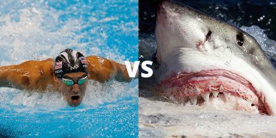 Michael Phelps to race great white shark for Discovery Channel's 'Shark Week'