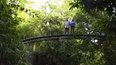 Couple spend 26 years together nursing a rainforest back to life