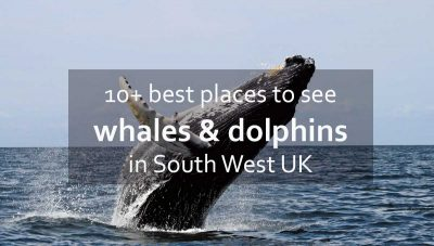 Best places to see whales and dolphins in South West UK