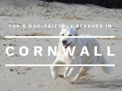 Top 5 dog-friendly beaches in Cornwall