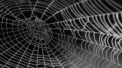 Timelapse of spider making a web shows one of nature's most unappreciated wonders