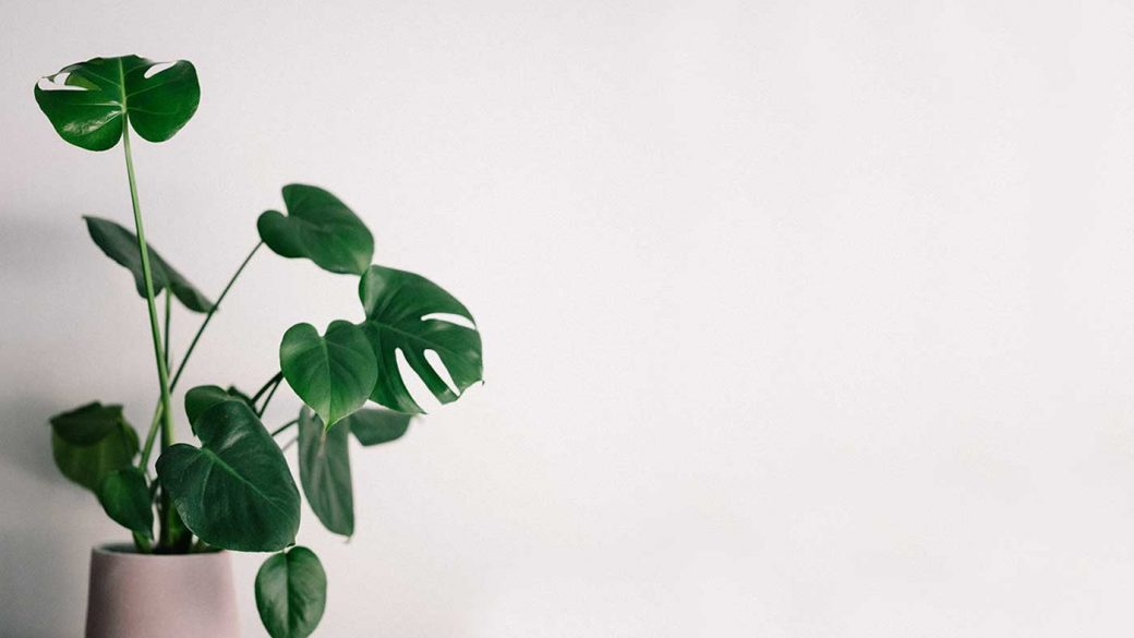 House plant against white wall