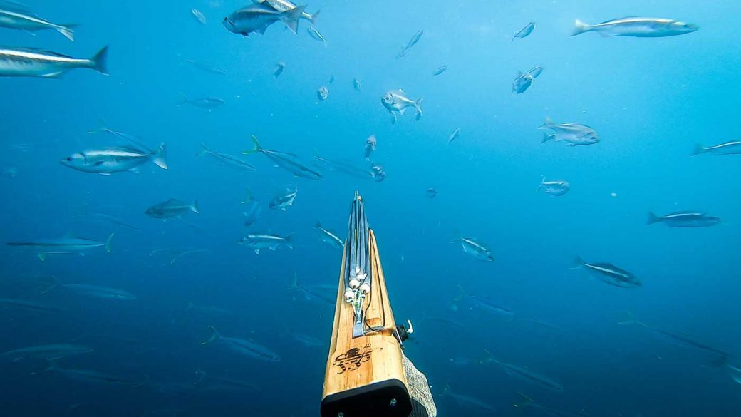 Diver spearfising in a shoal of fish