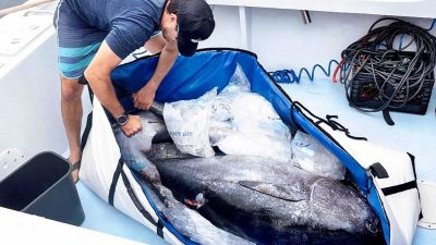 Fisherman storing his catch in a fish bag to keep it fresh